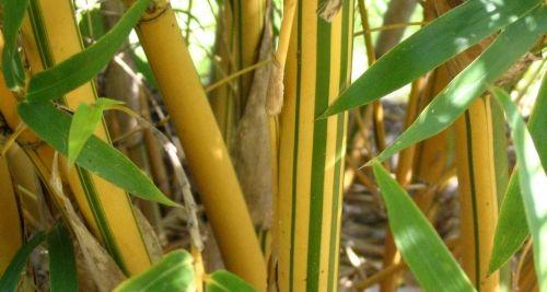 Bamboo & Palms