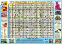 Greenpatch Companion Planting Chart