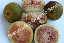 Fig Edible - Golden Genoa