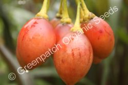 Tamarillo - Red