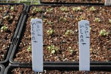 Plant Labels - Plastic x24