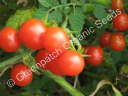 Tomato - Red Cherry Currant