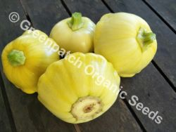 Squash - Golden Custard